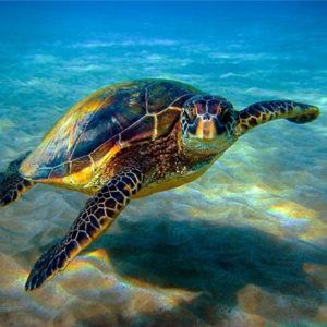 E' a Portici il Centro che cura, studia e mostra le tartarughe marine