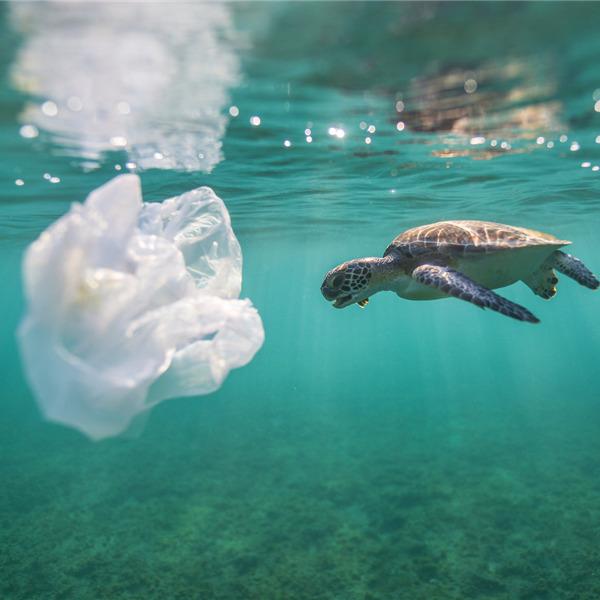 Incontro-dibattito: Un mare di plastica: come uscirne?