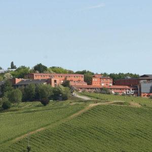 """Nasce """"Il Campiello per San Patrignano"""""""