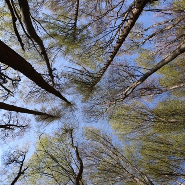 Dieci miti da sfatare sulle foreste italiane