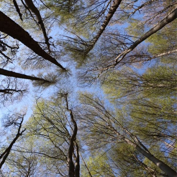 Cambiamenti climatici: ci salveranno le foreste? Il 2020 sarà l'anno degli alberi - Resilienza e consumo sostenibile