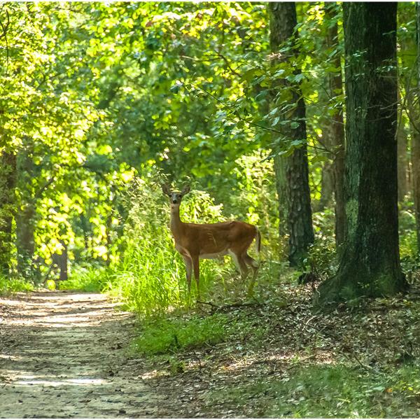 21 marzo 2020 Giornata Internazionale delle Foreste