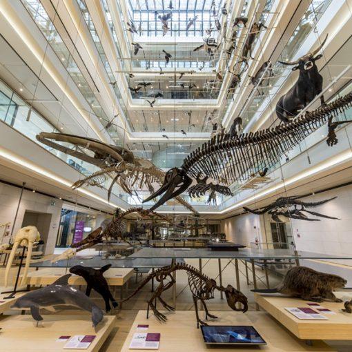 Esperimenti scientifici, favole da ascoltare e video in LIS: 15 progetti online del MUSE