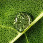 Plant Health 2020 - Salute delle piante / Salute dell'uomo