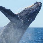 """""""Blu al plurale"""": evento online per la Giornata mondiale degli Oceani"""
