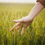 Agro-Social: bando da 70mila euro per progetti di agricoltura sociale di valore