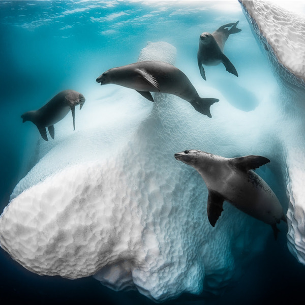 Siena International Photo Awards 2020: annunciati i vincitori