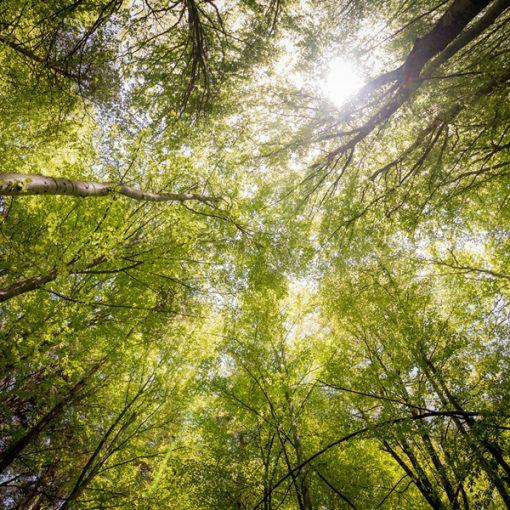 21 novembre 2020 - Giornata nazionale degli alberi: in Italia in aumento i boschi gestiti responsabilmente