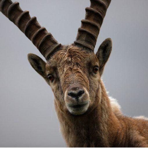 """""""Cari umani..."""": la nuova campagna WWF parla con la voce della Natura"""