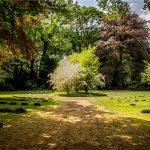 Disegnare il giardino. Concorso di idee per ripensare tre aree verdi pubbliche sul Lago d'Orta