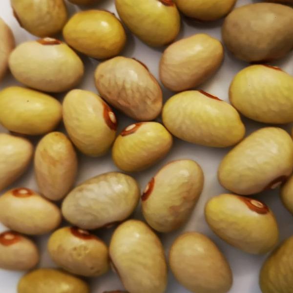 Nuovo presidio Slow Food in Calabria: i fagioli di Cortale