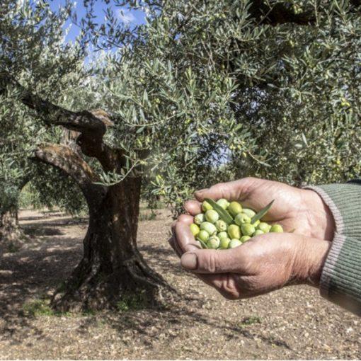 Dalla Puglia con sapore: il Tavoliere nel piatto