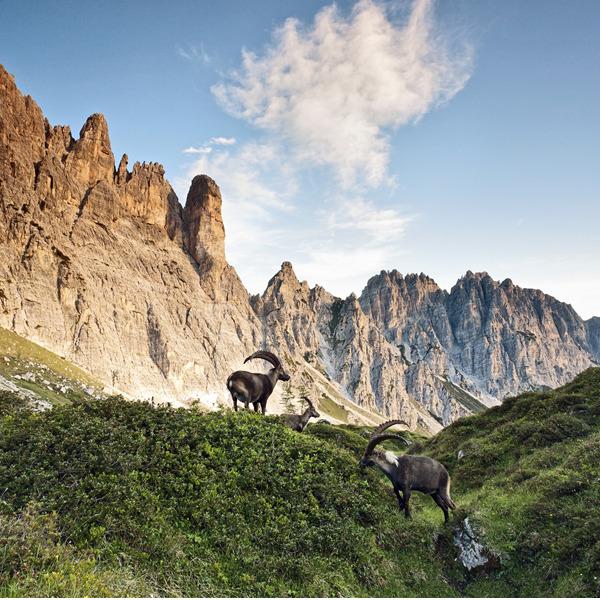 Dal Castello di Udine alle Alpi Carniche nei ricordi di Carlo Emilio Gadda