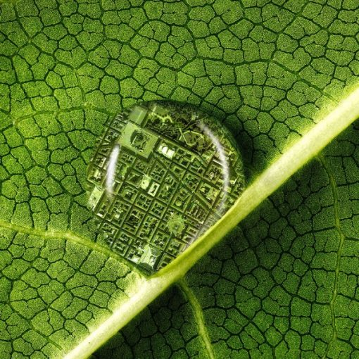 Spore: il podcast sulle malattie delle piante che hanno cambiato il mondo