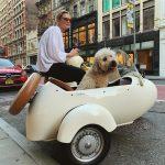 Dog Film Festival - Rassegna cine-letteraria dedicata all'universo del cane