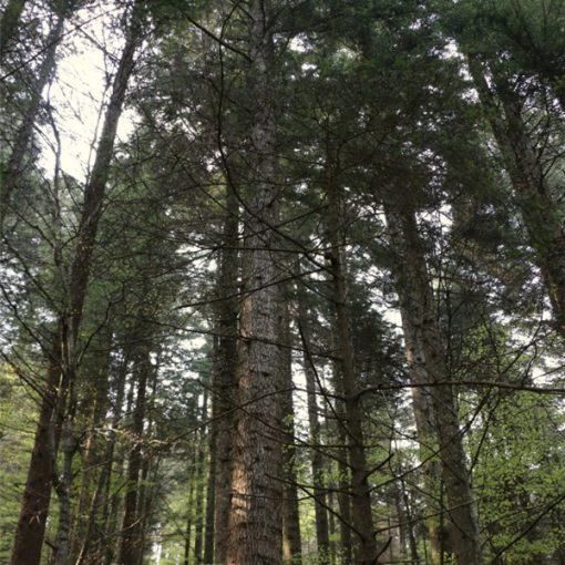 Giornata Mondiale delle foreste: le 5 azioni da mettere subito in atto per valorizzarle