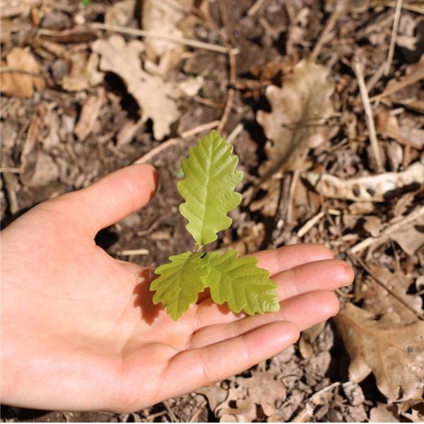 Earth Day 2021 - Le foreste: cuore pulsante per la difesa del suolo