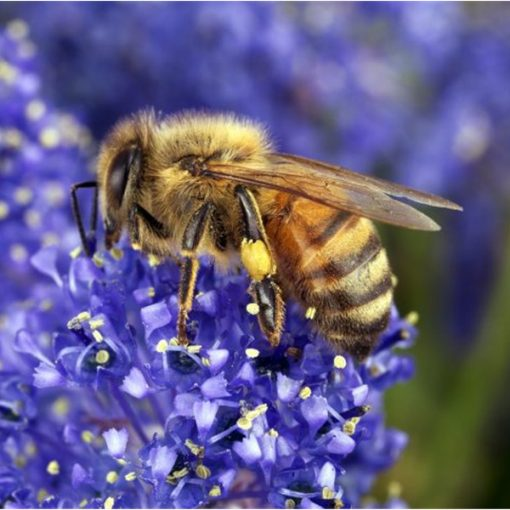 """Slow Food: """"Possiamo davvero parlare di uso sostenibile dei pesticidi?"""""""