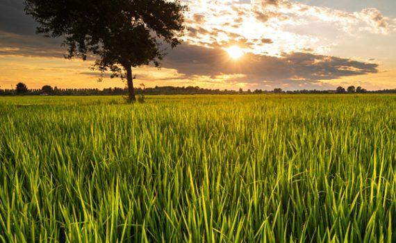 Nasce l'Oasi Ca' Granda, la prima oasi rurale d'Italia tra natura e cultura