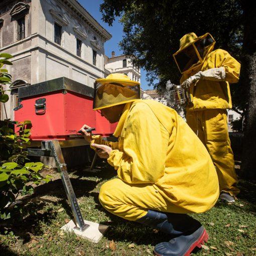 Regina Apium: le api prendono casa a Palazzo Barberini