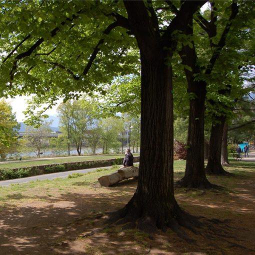 Al Parco bioenergetico di Bolzano per ritrovare il benessere psicofisico grazie al potenziale terapeutico degli alberi