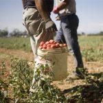 Festival World Agro Pontino - Due giorni di eventi per parlare di inclusione sociale e sviluppo sostenibile