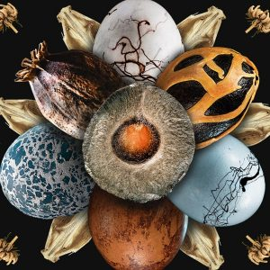 """""""Embryonica"""": mostra multimediale tra tecnologia e arte al Food & Science Festival"""