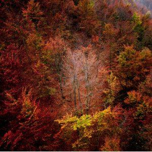 Forest therapy, corsi, escursioni ed attività all'Oasi Zegna